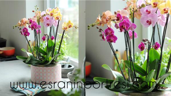 2 evde orkide bakımı