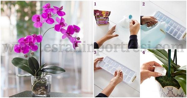 evde orkide bakımı f2_mini