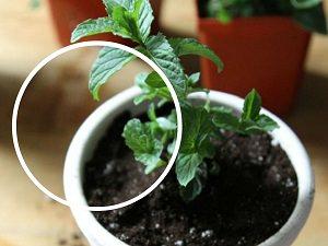 evde yetistirilebilen sifali bitkiler on_mini