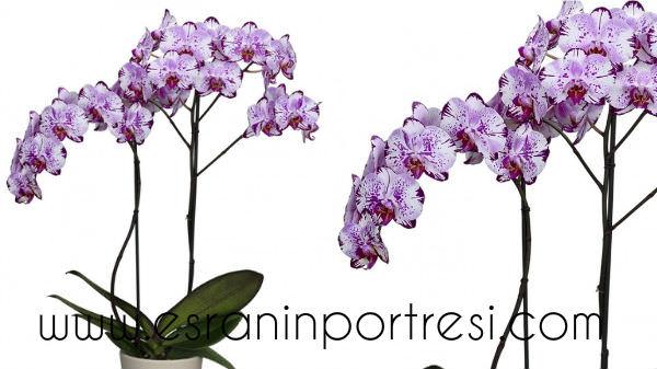 10 evde orkide bakımı
