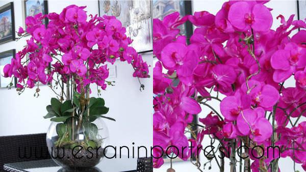 4 evde orkide bakımı