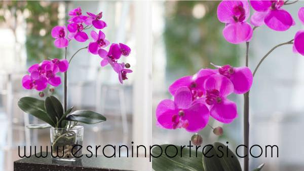 5 evde orkide bakımı
