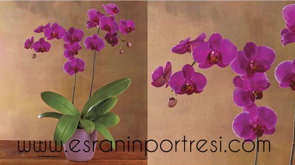 7 evde orkide bakımı