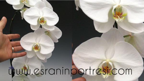 8 evde orkide bakımı