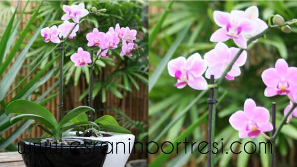 9 evde orkide bakımı